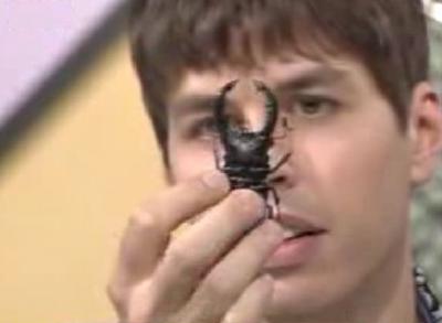 Bugsbugsbugs